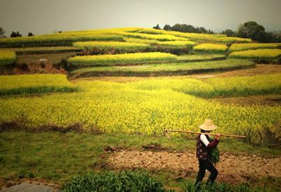 徵地制度改革將進一步深化 確保農民知情權