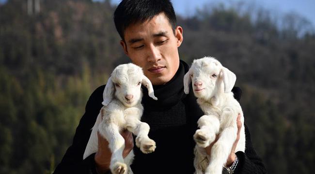 """山村""""羊總管""""趙磊的返鄉創業路"""