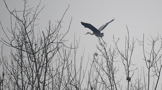 陜西漢中地區出現霧霾天氣