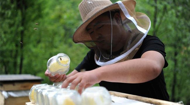陜西略陽:發展養蜂産業 助力脫貧攻堅