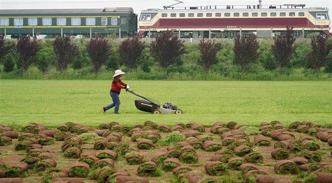 綠草皮裏的致富經