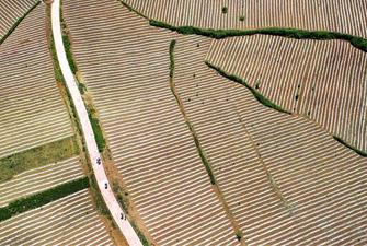陜西洛南:錦繡大地蘊豐收