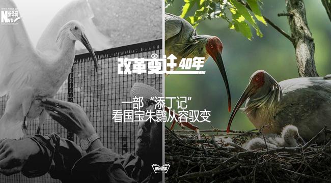 """[改革變遷40年]一部""""添丁記""""看國寶朱鹮從容馭變"""