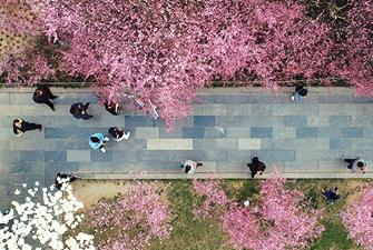 春回長安 芳草天涯