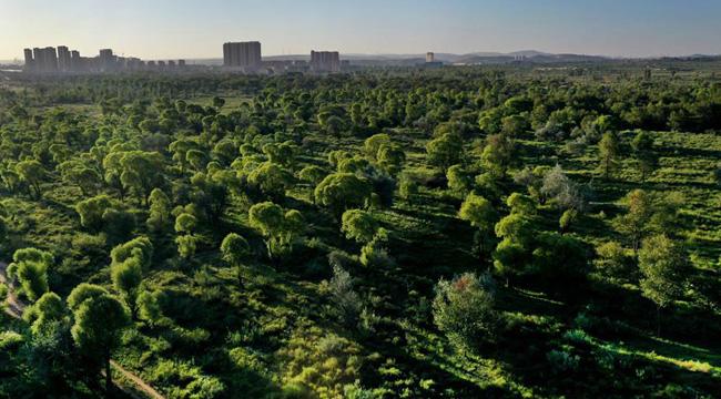 陜西靖邊:沙漠中的森林城市