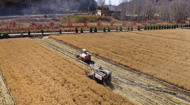 北大荒攜手南泥灣 千畝水稻喜獲豐收