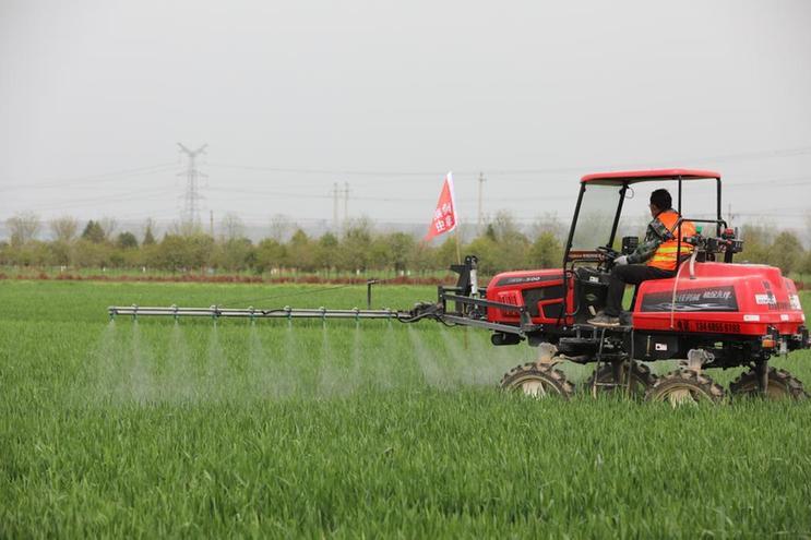 陜西:積極開展小麥條銹病防治