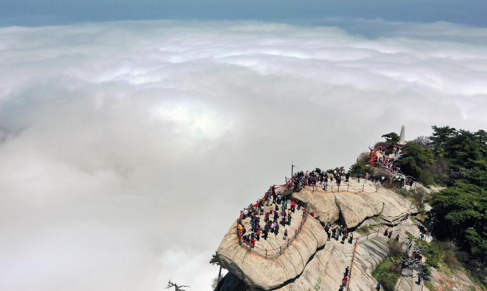 西岳華山:壯麗雲海入畫來