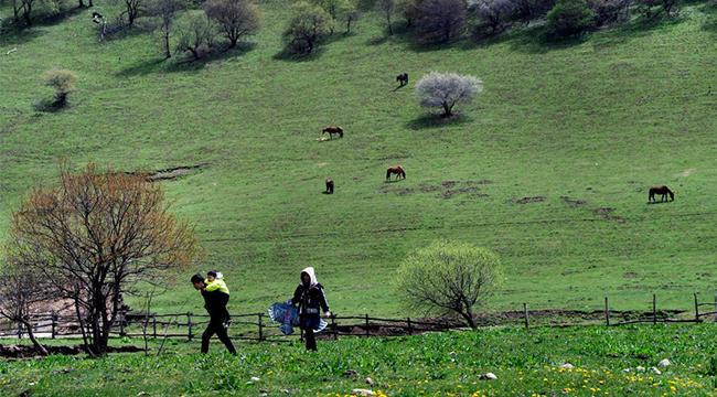 春風梳粧草原綠 遍野山花遊人醉